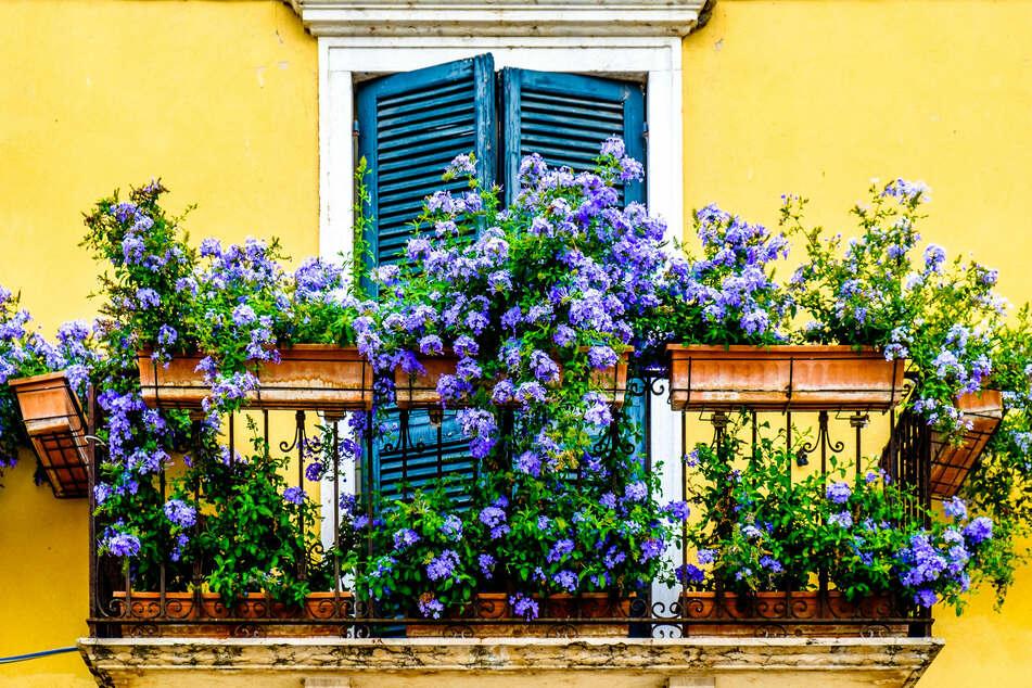 Buschige oder rankende Pflanzen zaubern auch auf Mini-Balkonen eine tolle Atmosphäre.