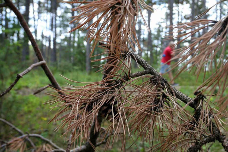 5000 Hektar für gesunde Wälder: 10 Millionen Bäume in Bayern gepflanzt