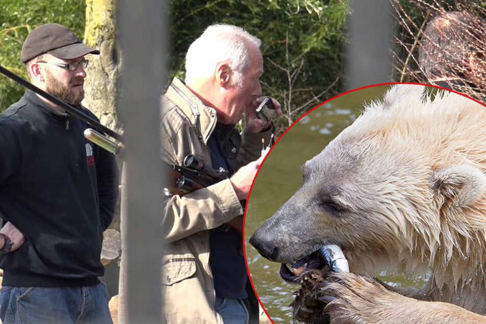 Zoodirekter Michael Böer (Mi.) gab nun die Ursache für den Ausbruch von Tips bekannt.