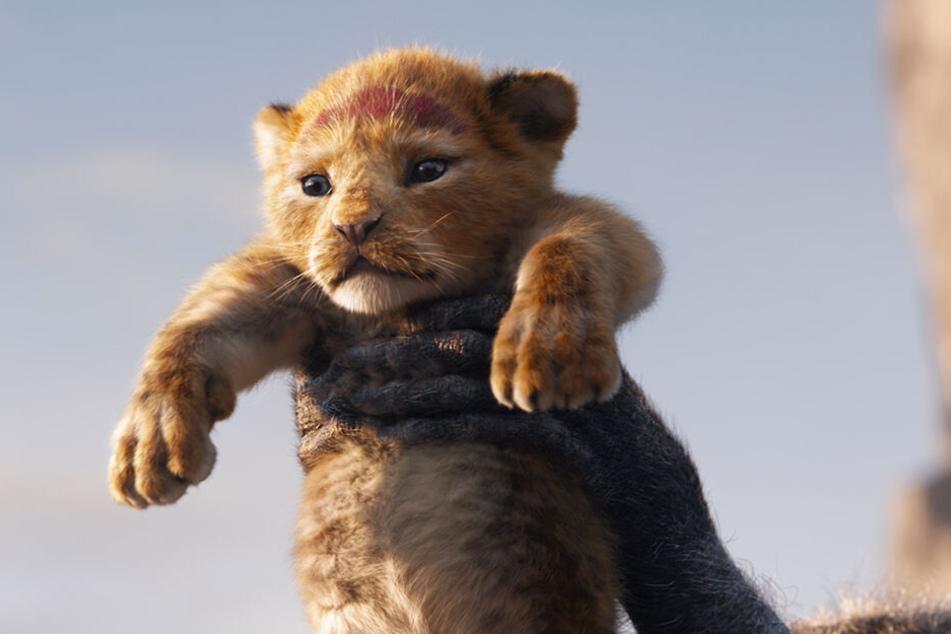 Die legendäre Geschichte vom Löwen Simba wurde neu verfilmt und kommt am 18. Juli 2019 in die deutschen Kinos.