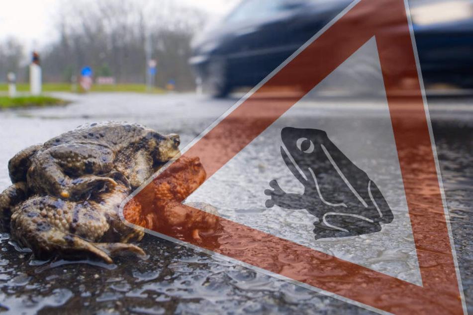 Achtung Autofahrer! Die ersten Kröten sind schon los