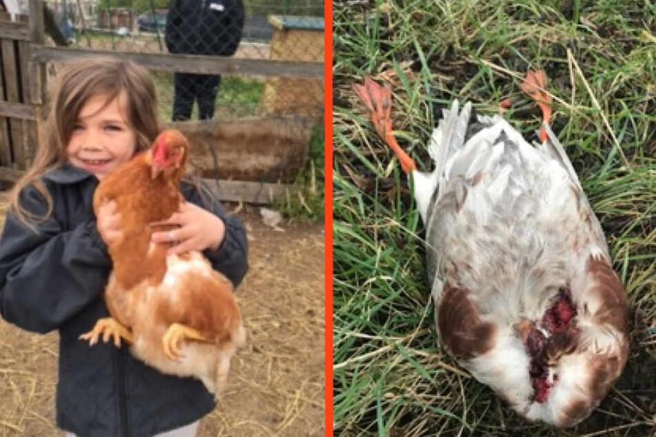 Töchterchen Charlotte (8) mit einem der geklauten Hühner. Rechts: Eine der geköpften Enten.