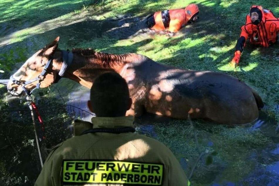 Spektakuläre Rettung! Feuerwehr zieht Pferd aus dem Sumpf