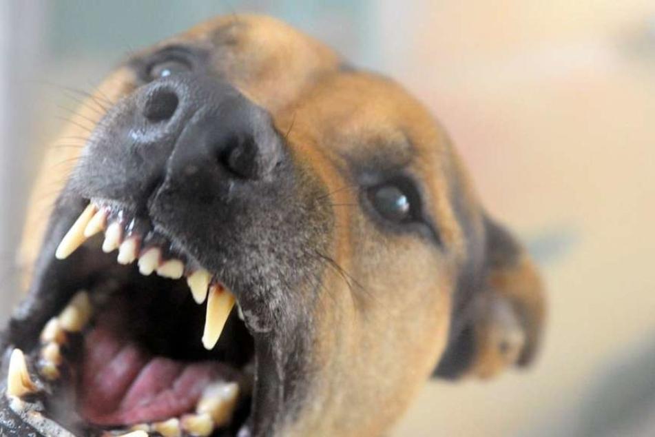 Frau grauenvoll von Hund angefallen und totgebissen