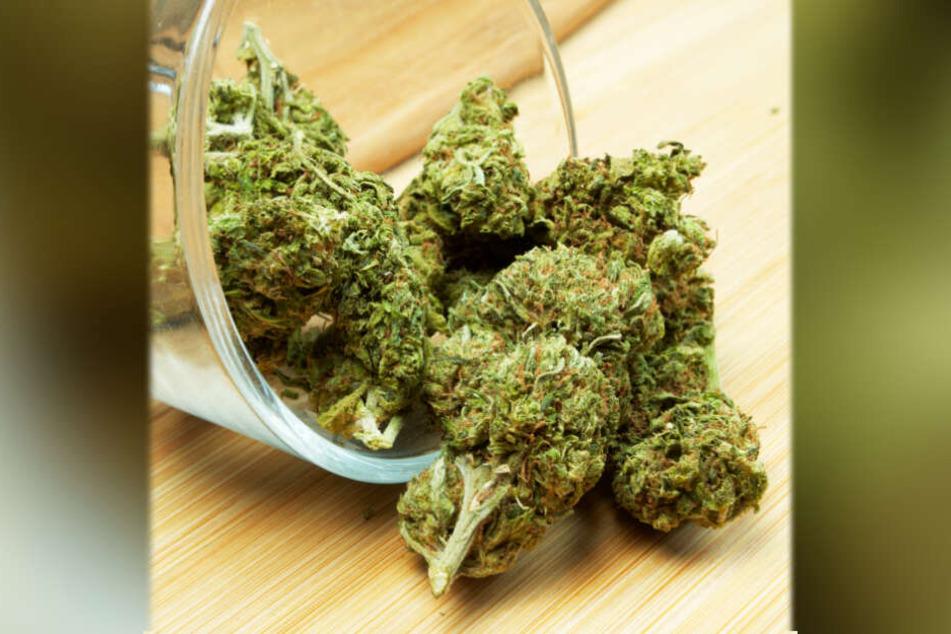 In einer Chemnitzer Wohnung wurde ca. 822 Gramm Marihuana sichergestellt.