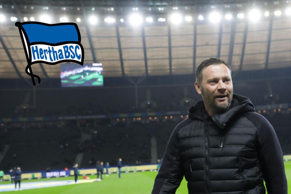 Hertha BSC verlängert wohl mit Trainer Dardai