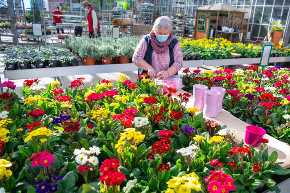 Bayerns Baumärkte erwarten Andrang: Hobby-Gärtner in den Startlöchern