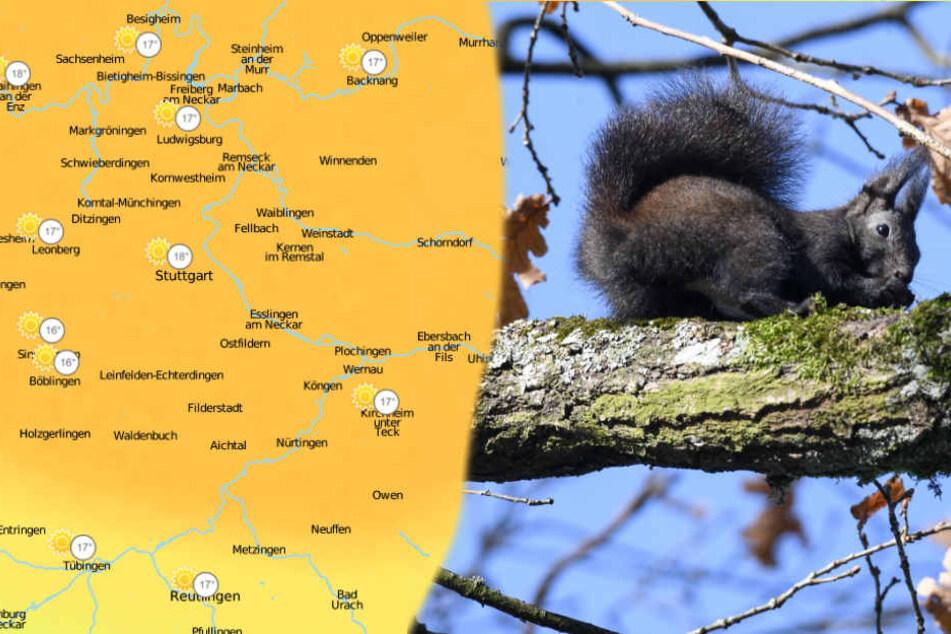 Am Donnerstag steigen die Temperaturen auf frühlingshafte Werte.
