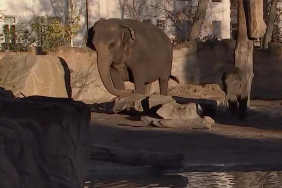"""""""Elefant, Tiger & Co."""": Familienzuwachs für Kiran und ein Abschied bei den Zebras"""