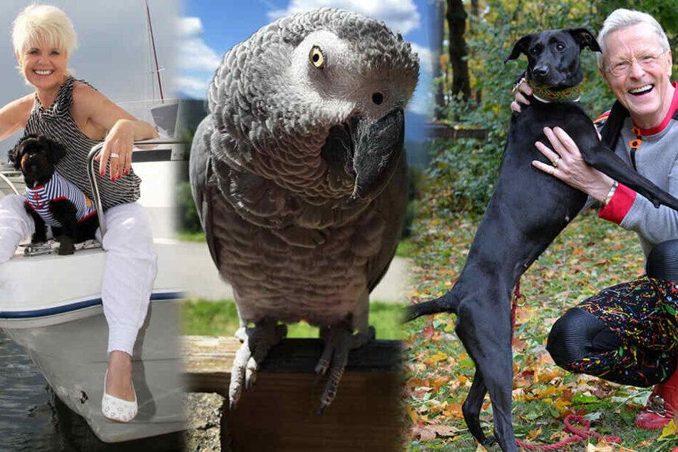 Tag des Haustieres: Das sind die besten Freunde unserer Promis