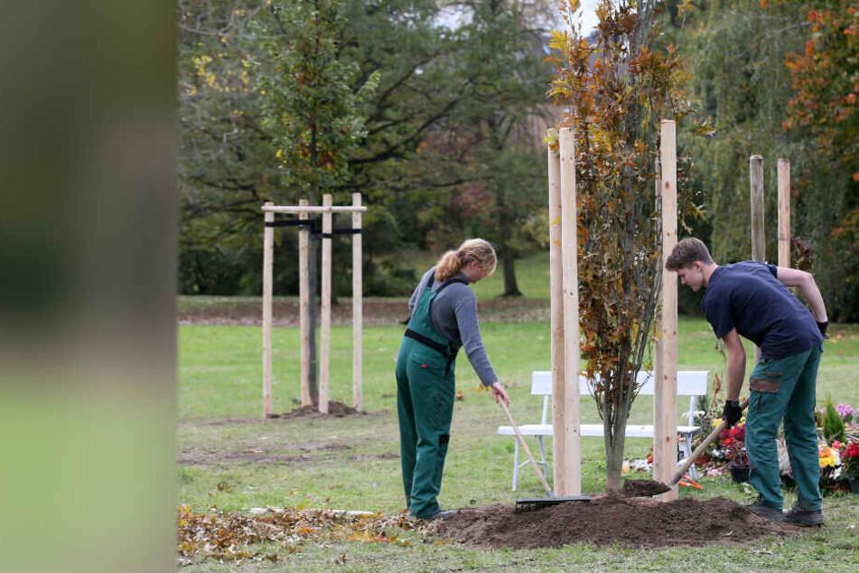 Zwickau: Gedenkbäume für NSU-Opfer werden neu gepflanzt