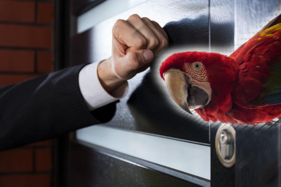 Der Papagei war dem Nachbarn zu laut. (Symbolbild)