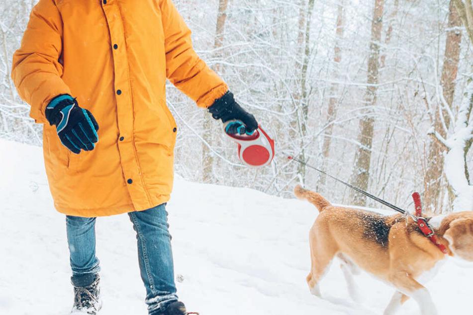 Junge geht mit Hund an Heiligabend im Wald Gassi, dann wird es brenzlig