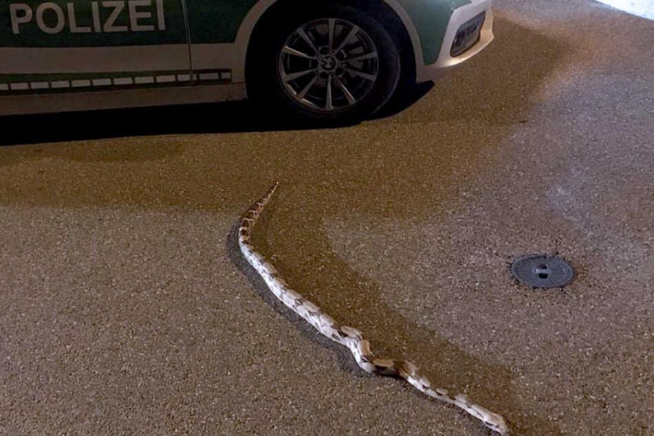 Mitten in der Stadt! Lange Schlange sorgt für Straßen-Sperrungen