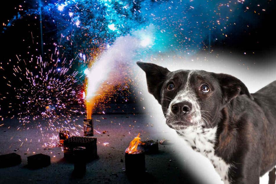 Silvester mit Hund: Tipps für einen stressfreien Jahreswechsel