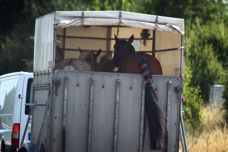 Schwerer Unfall: Betrunkener knallt mit Auto auf Pferdeanhänger!