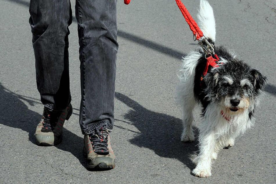 Der Fußgänger beschwerte sich und landete im Krankenhaus. Der Hund blieb unverletzt. (Symbolbild)