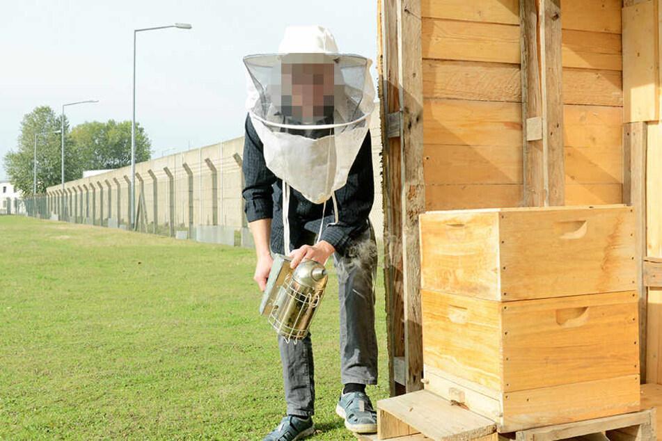 Arbeit ist ein Mittel zur Resozialisierung. Hier ein Insasse der JVA Zeithain, der sich um Bienen kümmert.