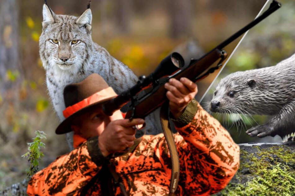 Luchse getötet, Otter ertränkt: Jäger sieht Strafe für seine Gräueltaten nicht ein