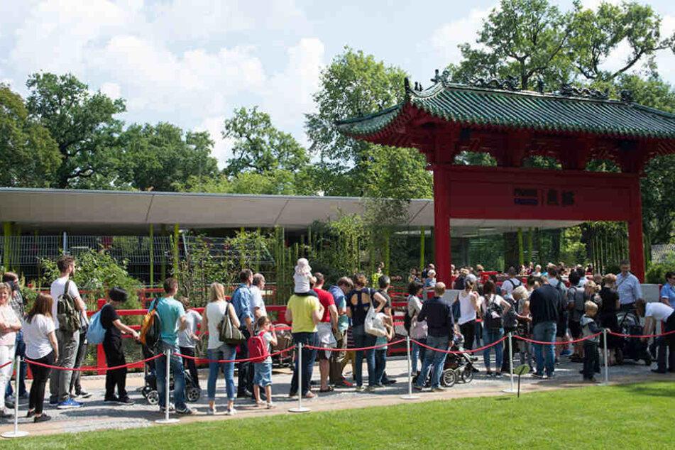 Nach der Eröffnung des Geheges war der Besucherandrang besonders groß.