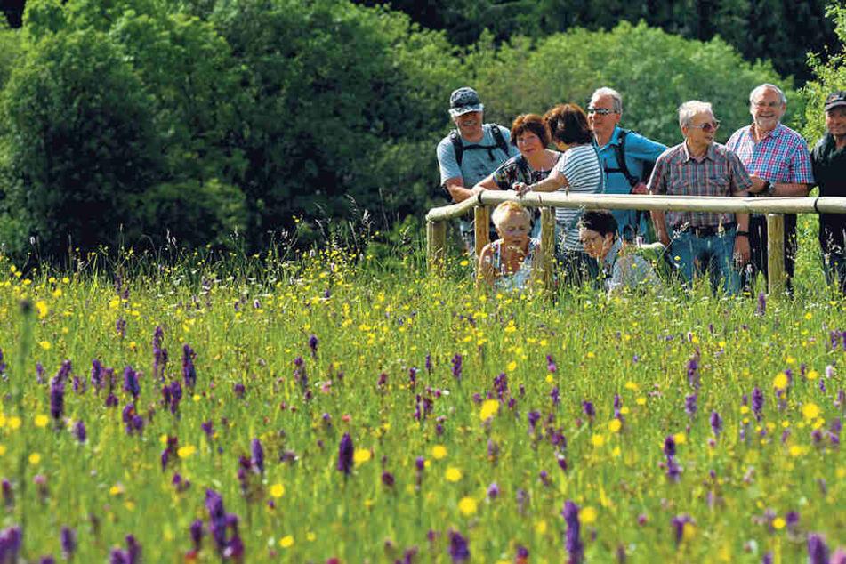 Die volle Blumenpracht lockt zahlreiche Besucher in das Naturschutzgebiet.