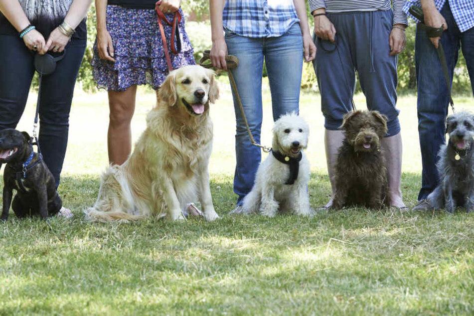 Viele Hundebesitzer lassen sich ungewöhnliche Namen für ihre Vierbeiner einfallen. (Symbolbild)