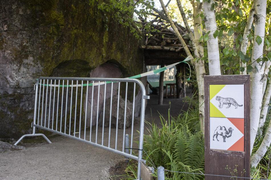 Der abgesperrter Bereich zum Tigergehege im Zoo Zürich kurz nach dem tödlichen Angriff.