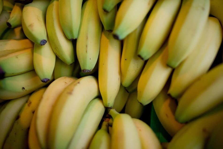 In Frankfurt wachsen Bananen!