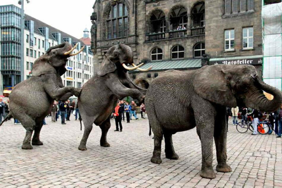 Das Wildtierverbot in Zirkussen hat keinen Bestand. Exotische Tiere können weiter in der Stadt auftreten, nachdem die Landesdirektion den Beschluss kassierte.
