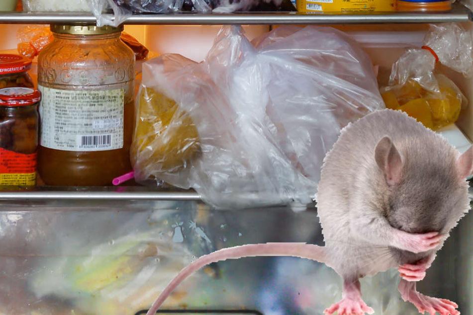 Da schämen sich sogar die Mäuse, so unhygienisch wurden die Geschäfte von einigen Betreibern geführt. (Symbolbild)