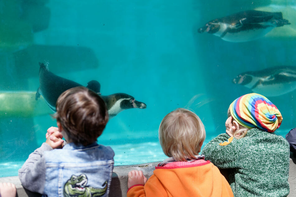 NRW-Zoos dürfen trotz Notbremse weiter öffnen - nur der Kölner Zoo nicht