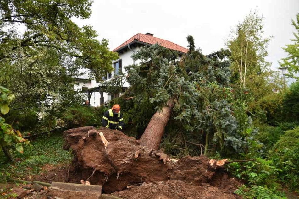 In Baden-Württemberg zersägt ein Feuerwehrmann einen umgestürzten Baum.