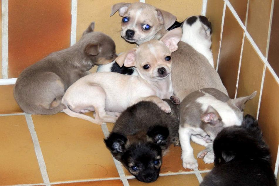 Polizei findet über 100 kranke Hunde und Katzenbabys in Transporter