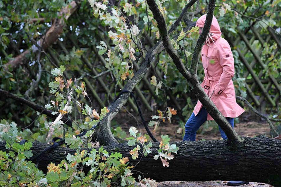 In Brandenburg starben aufgrund des Sturms vier Menschen.