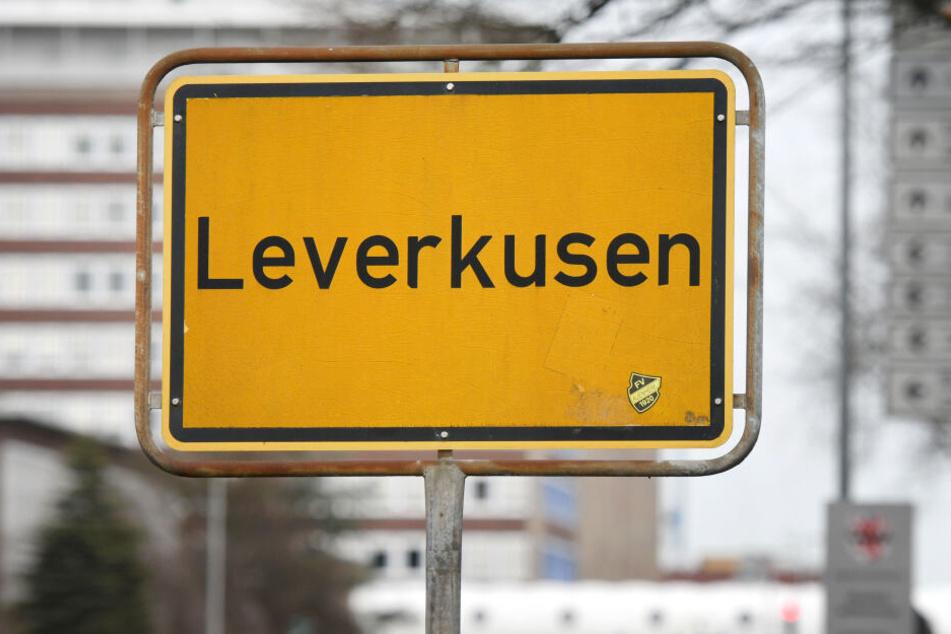 Die Stadt Leverkusen räumt eine Rattenproblematik am Busbahnhof Wiesdorf ein (Symbolbild).
