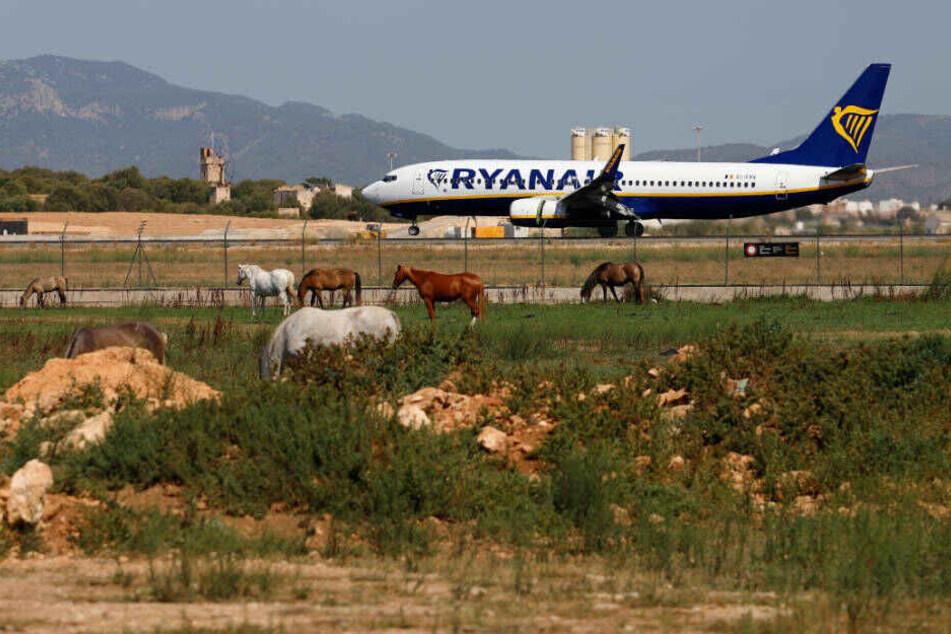 Ein Ryanair-Flieger landet auf dem Flughafen von Palma de Mallorca.