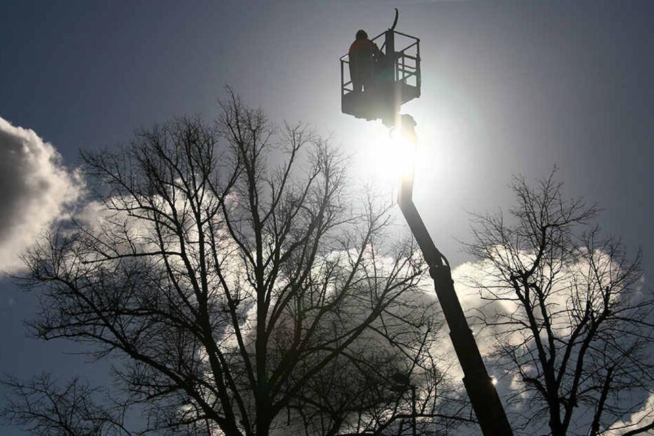 Die Baumbestände an Rastplätzen werden auf Herz und Nieren überprüft. (Symbolbild)