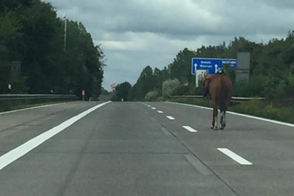 Das Pferd spazierte mutterseelenallein auf der Autobahn entlang.