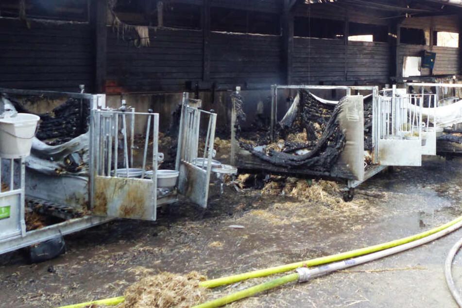 Die Stallboxen und der angrenzende Stall wurden Opfer der Flammen.