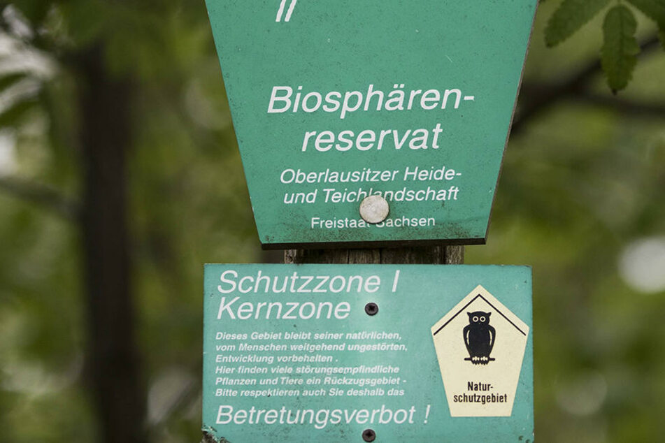 Im Biosphärenreservat soll wieder begrenzt Landwirtschaft betrieben werden.
