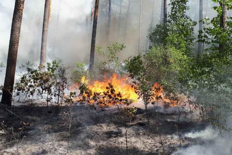 Waldbrände sind extrem gefährlich, auch, weil sie sich rasend schnell ausbreiten können.