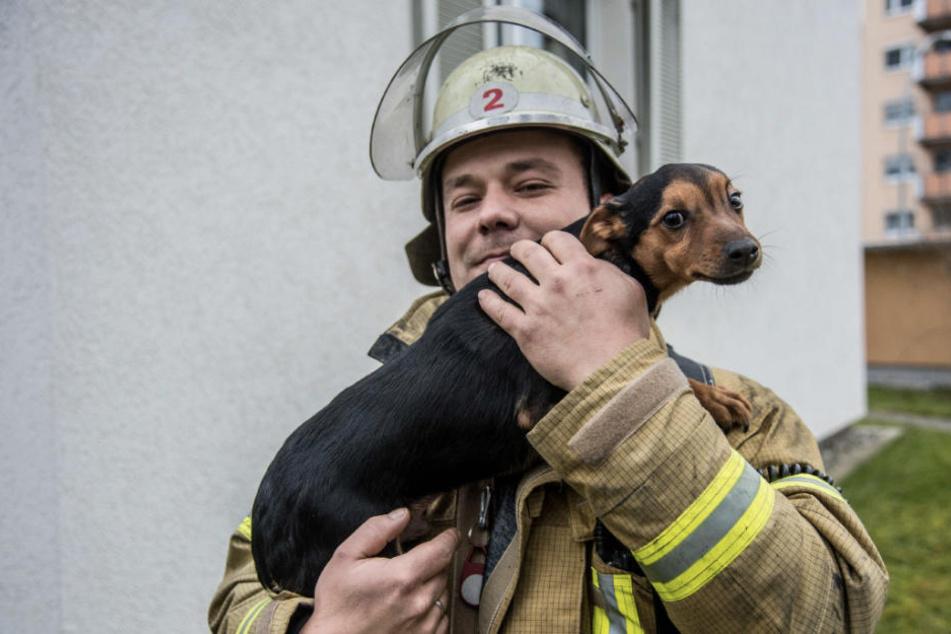 An Heiligabend: Feuerwehr rettet Familie und Hund