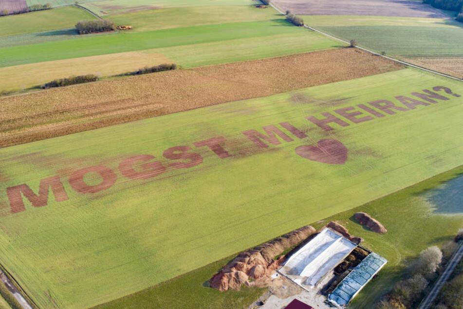 """In überdiemensionalen Buchstaben steht in einem Feld """"Mogst mi heiran?"""". Landwirt Florian Weiß aus der Oberpfalz hat seiner Freundin einen Heiratsantrag in ein Feld gesät."""
