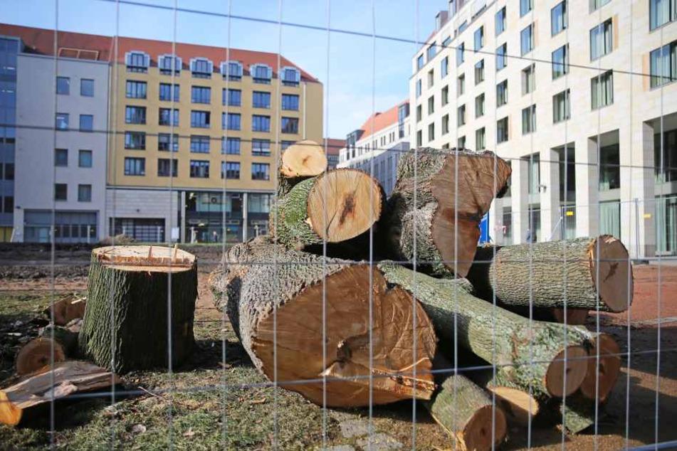 Erste Bäume wurden gefällt. Ende 2017 sollen die Bauarbeiten starten.
