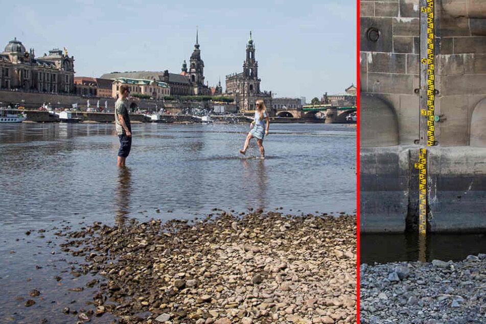 Ebbe in der Elbe: Schifffahrt droht Stillstand
