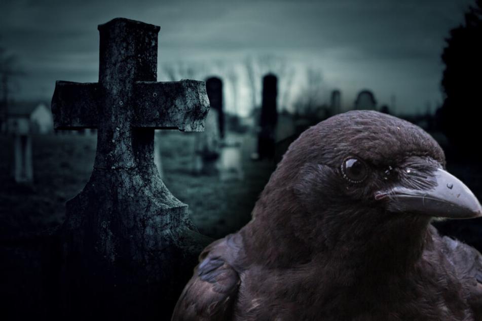 12 tote Raben auf Friedhof gefunden: Weiße Essenz stellt Ermittler vor Rätsel