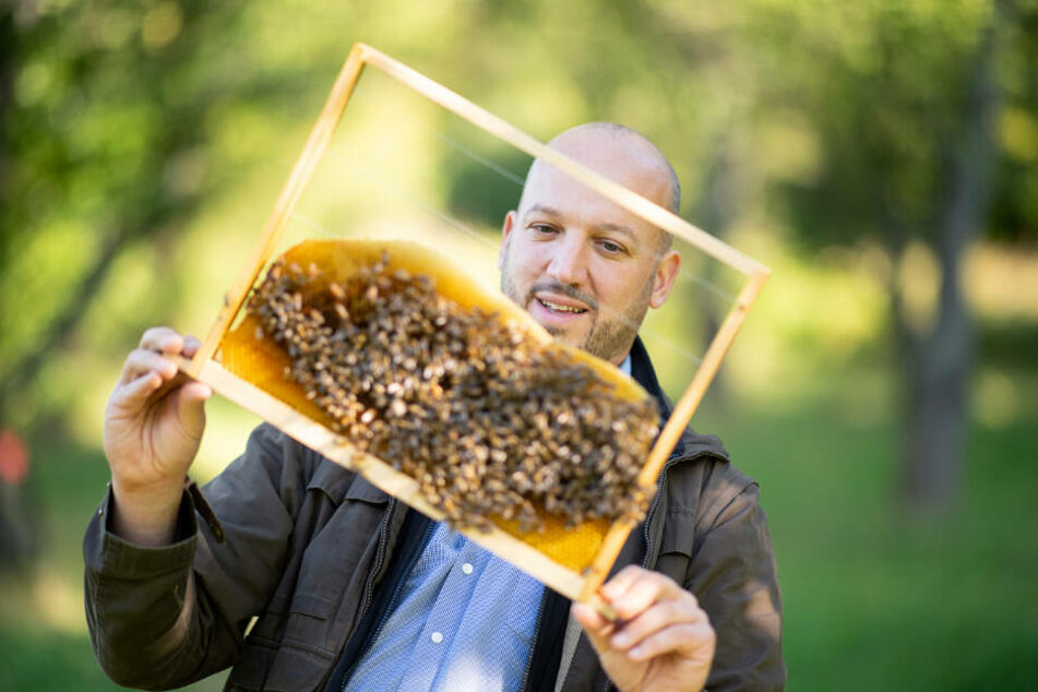 Tobias Miltenberger schaut sich ein Rahmen mit Honigbienen an.