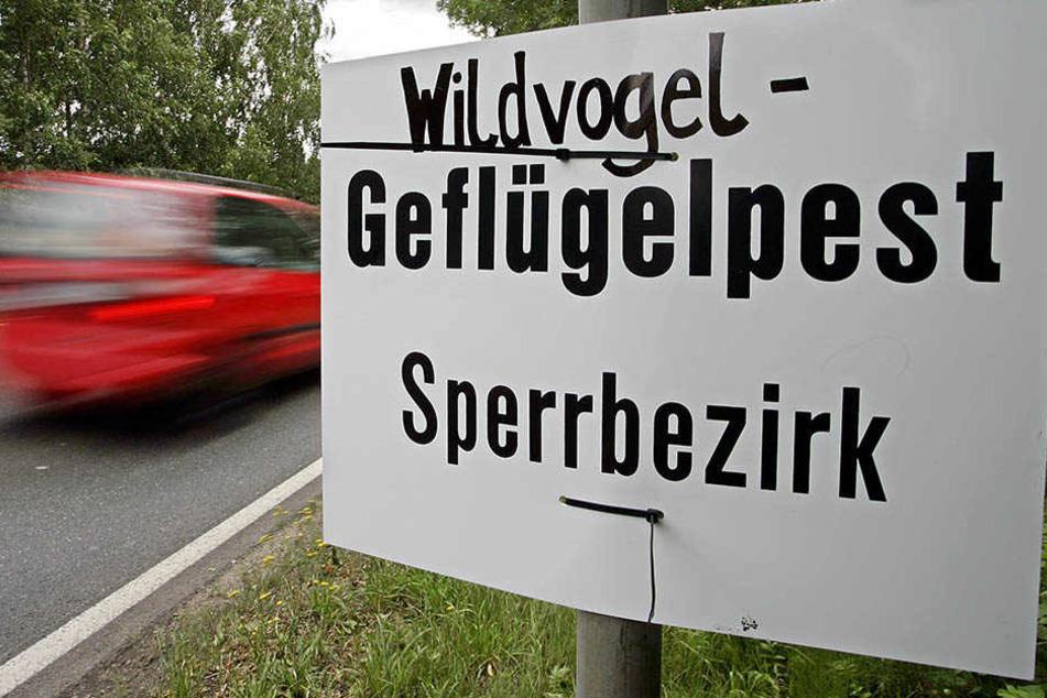 Seit diesem Freitag treten die Sperrverordnungen wegen Geflügelpest auch in einem dritten Bereich in Leipzig in Kraft. (Symbolbild)