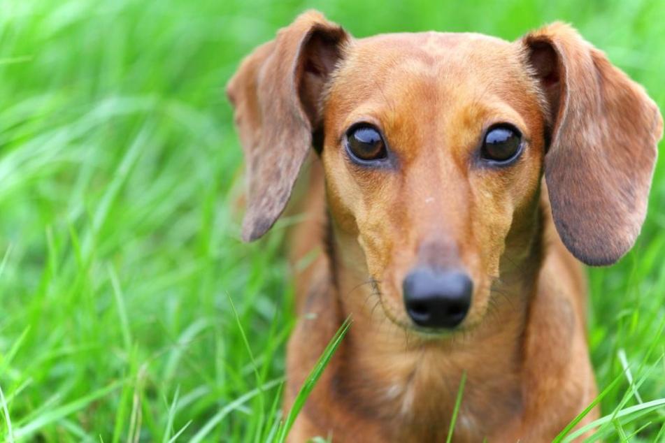 Eine Frau hat am Sonntagmorgen in Berlin einen toten Hund gefunden (Symbolbild).