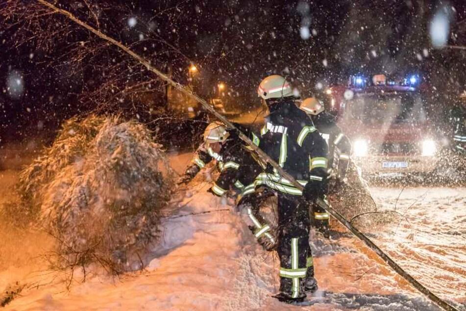 Mehrere Bäume stürzen unter der Schneelast zusammen, wie hier in Hirschberg bei Olbernhau.